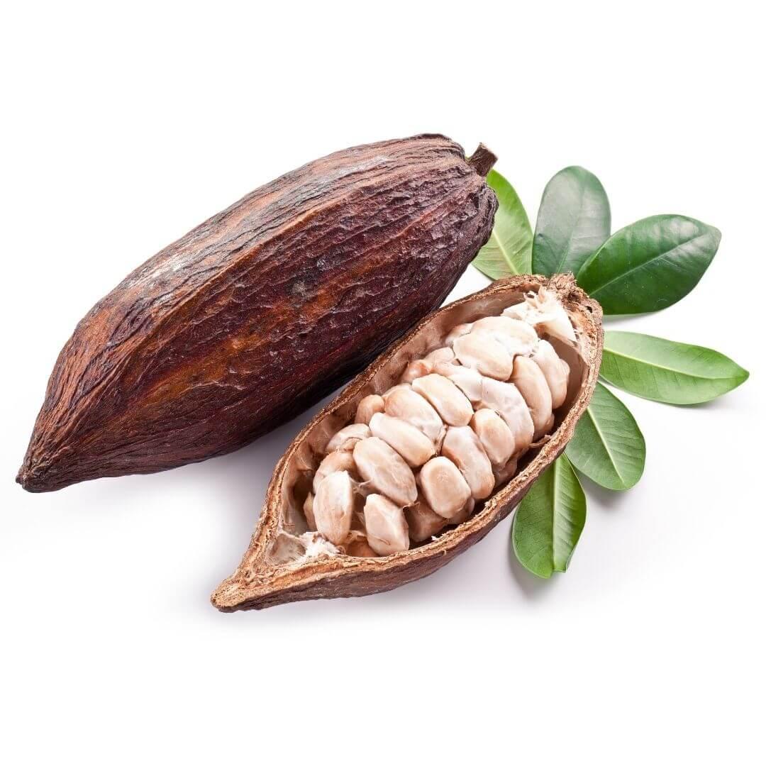 Organic Cocoa butter skincare
