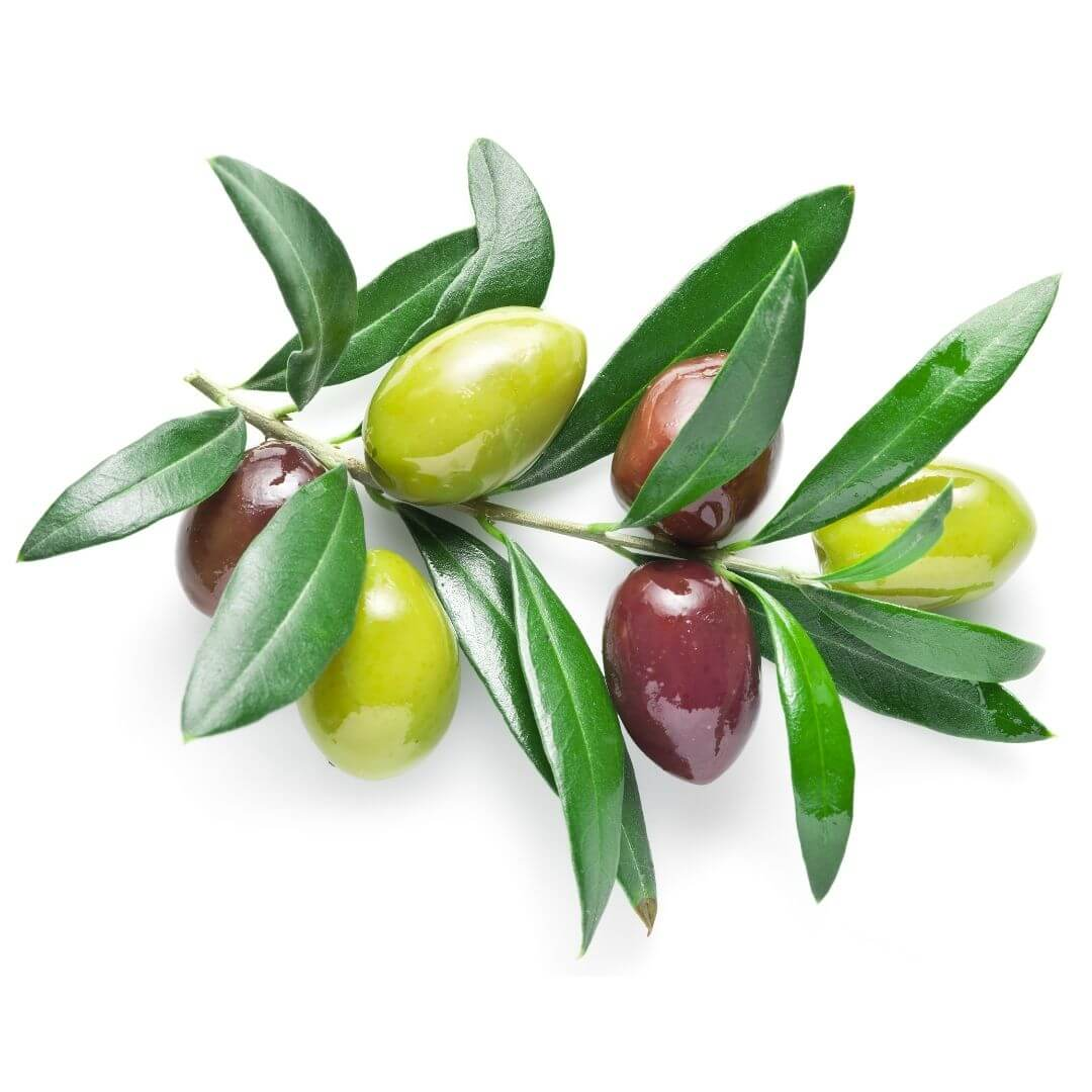 Olive (Squalane)